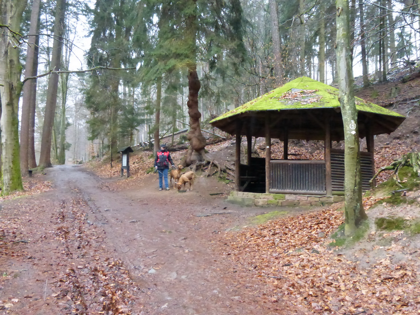 0215 Odenwald 7