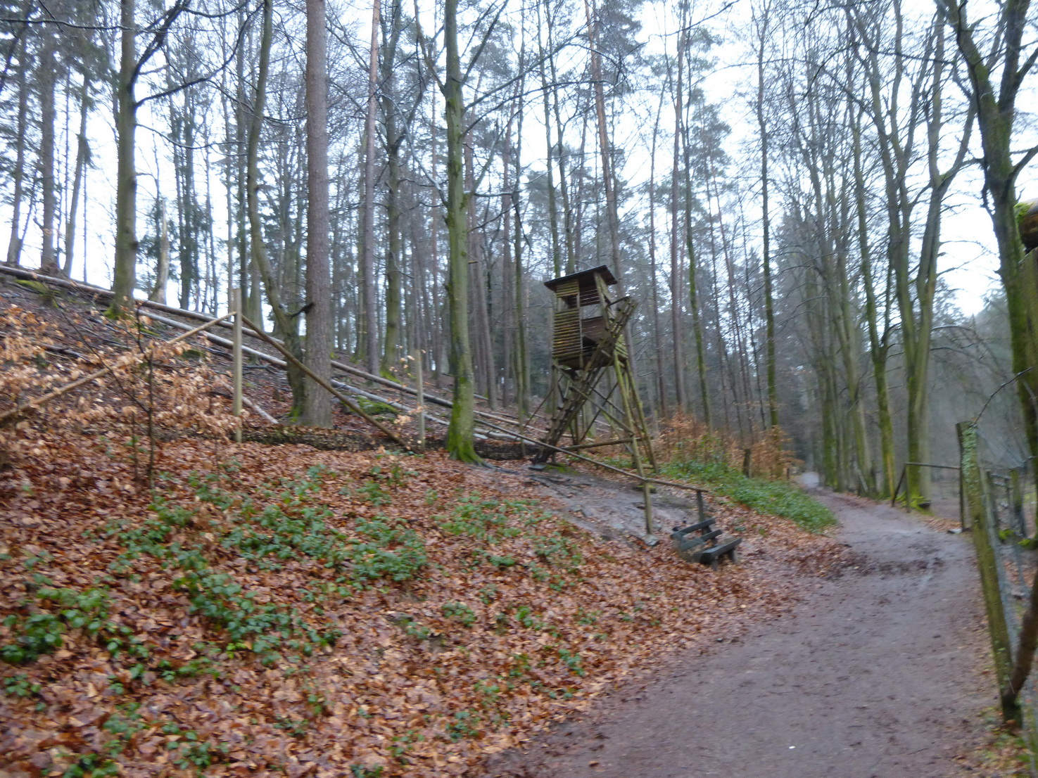 0215 Odenwald 8