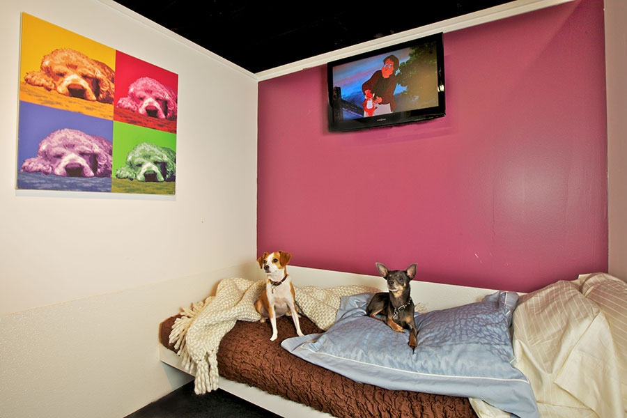 Sensational Suite in New York Foto: D Pet Hotel, New York