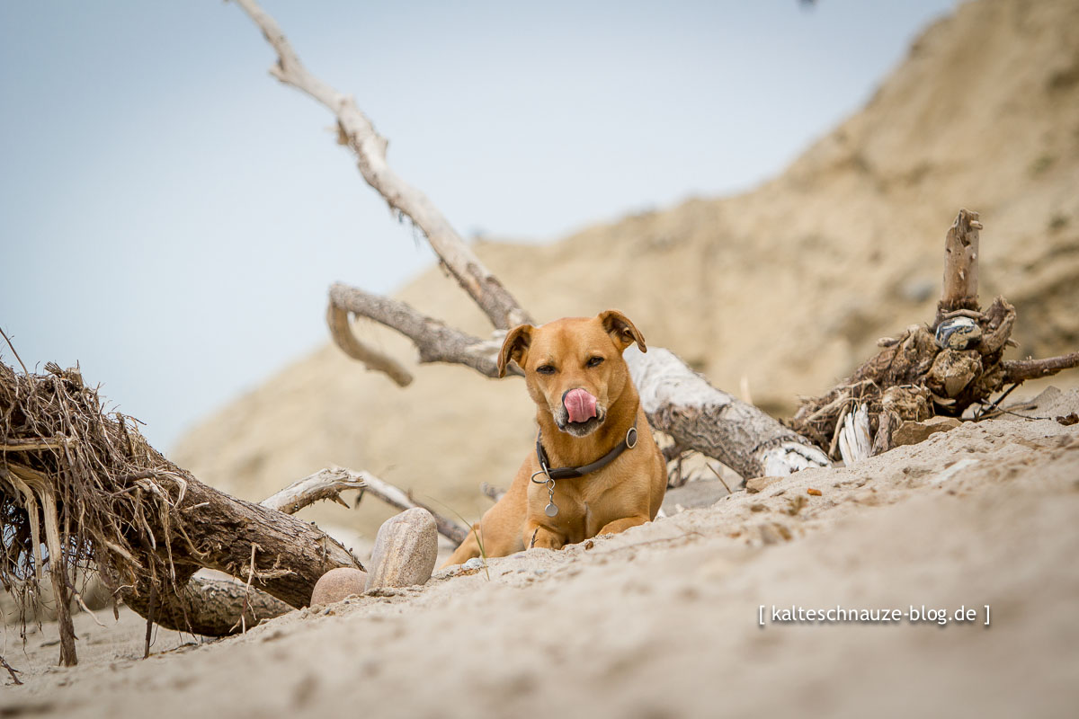 Cabo-Hohes-Ufer-Ahrenshoop_2014-7268[1]