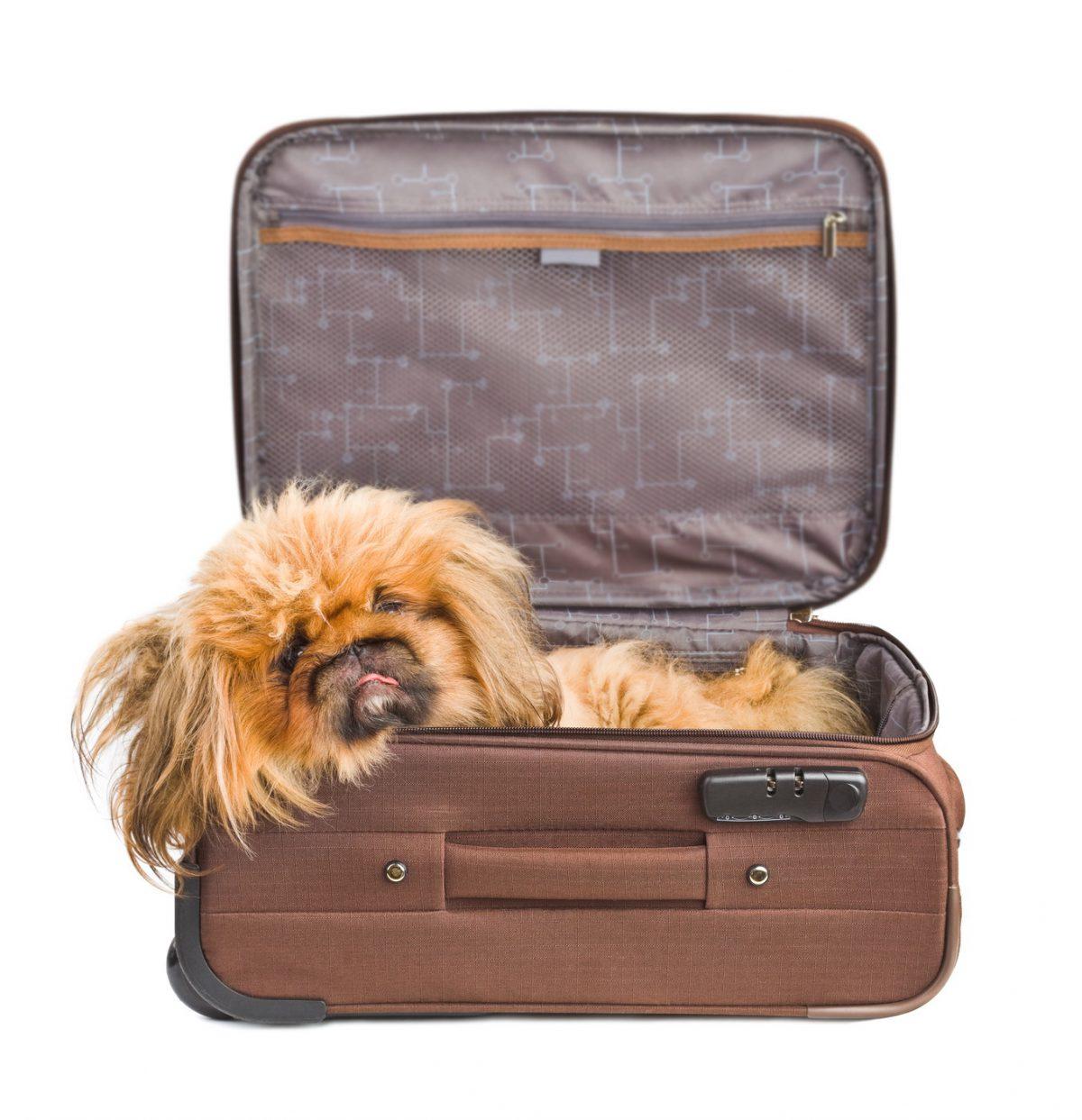 Haustiere im Hotel sind kein Störfaktor
