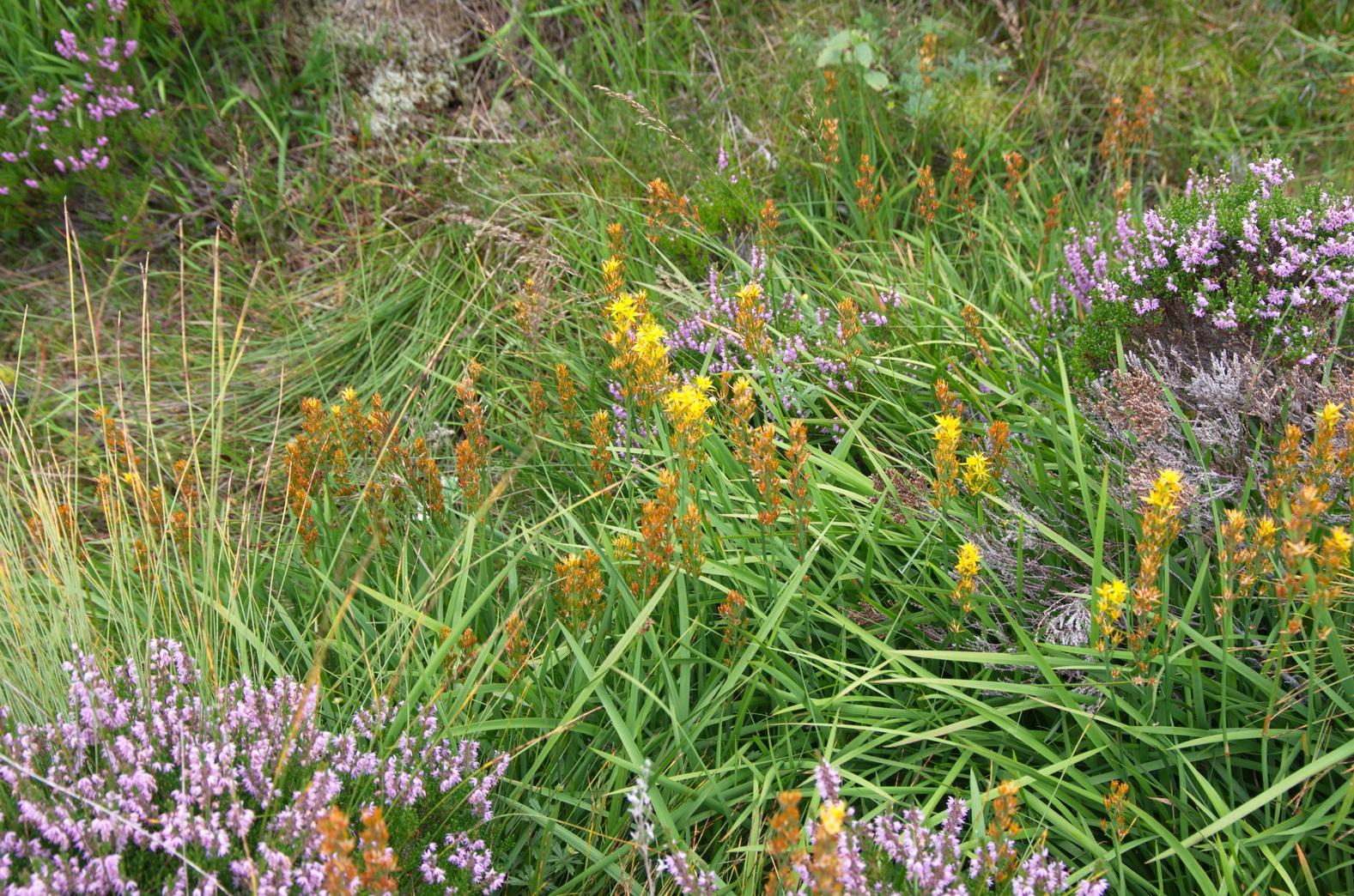 ... hier und da blüht es gelb und violett ...