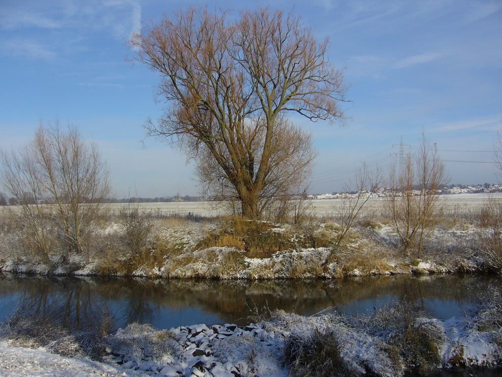 ... noch vor wenigen Wochen stand der Baum im bunten Herbstlaub ...
