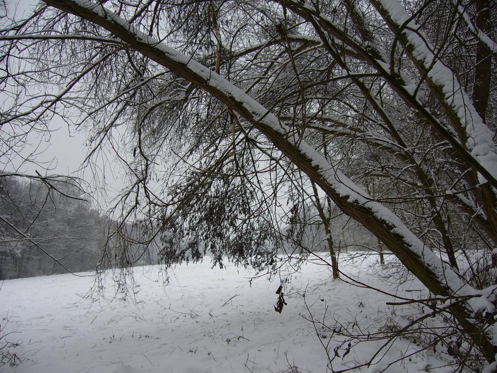 Verschneite Wiesen fast mitten in Frankfurt