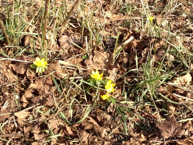 Die ersten Vorboten des Frühlings?