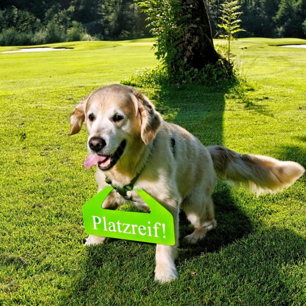 Golfen mit Hunden - Golf-Platzreife für Hunde in Österreich