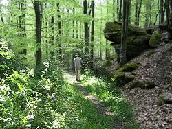 Quelle: www.naturpark-hoher-vogelsberg.de