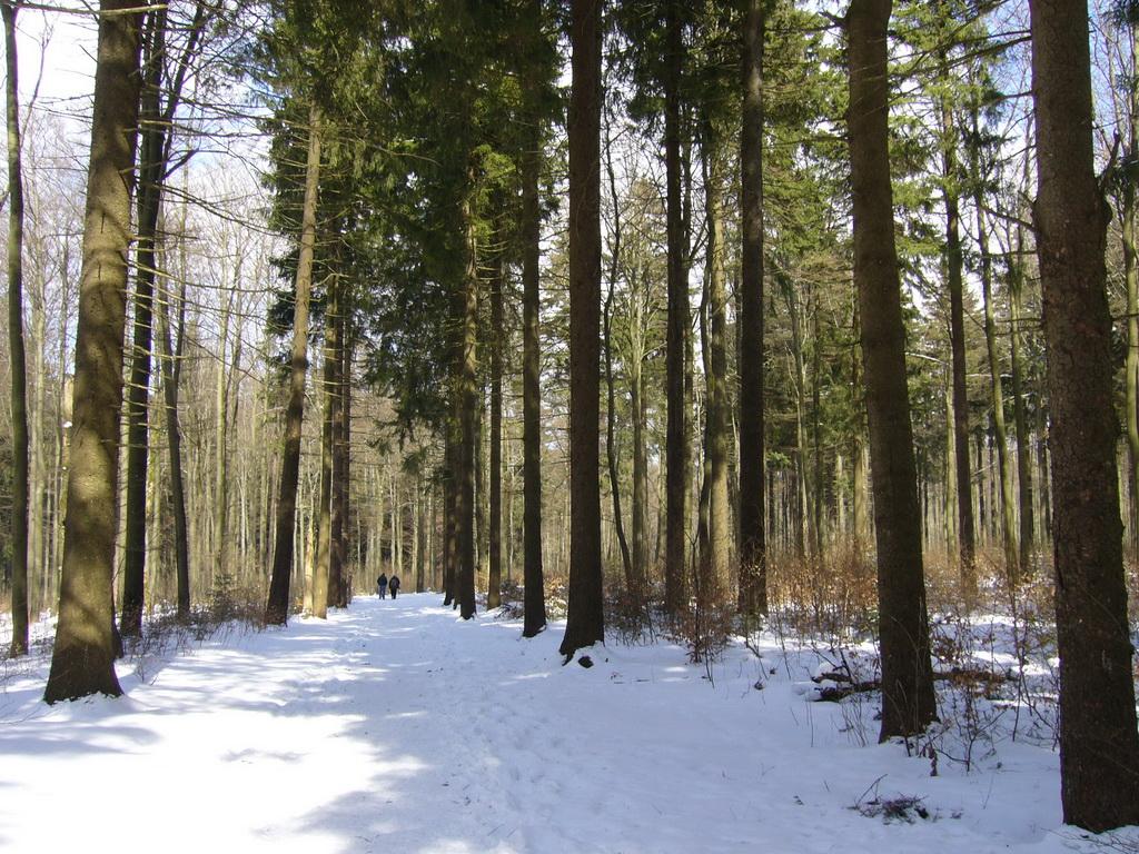 Naturpark Hoher Vogelsberg - ein Osterausflug in den Winter
