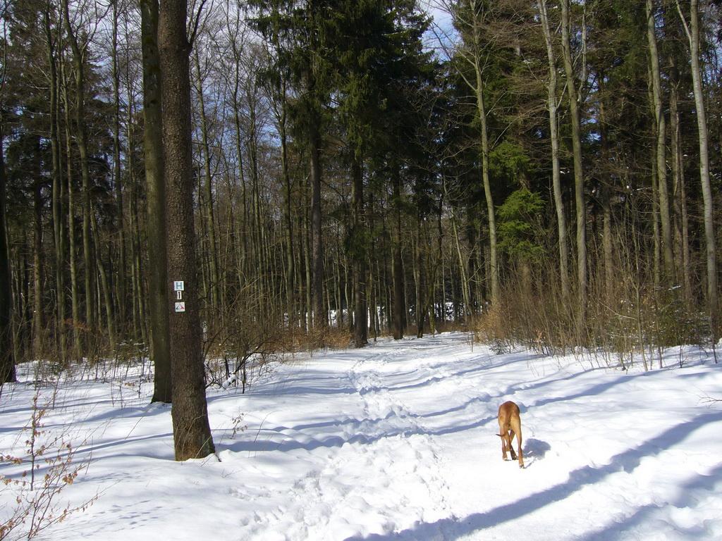 ... Dayo gefällt der verschneite Frühlingswald ...