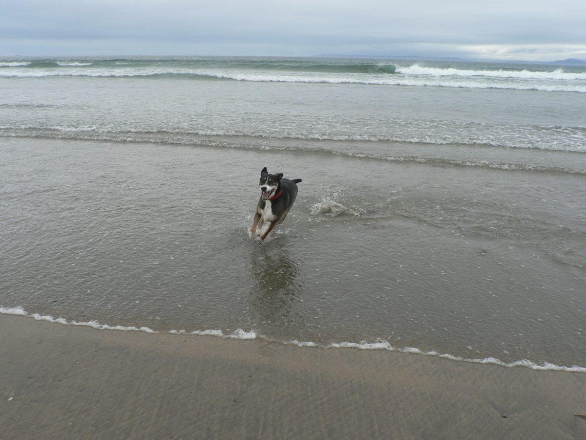 Rocky reist nach Irland!
