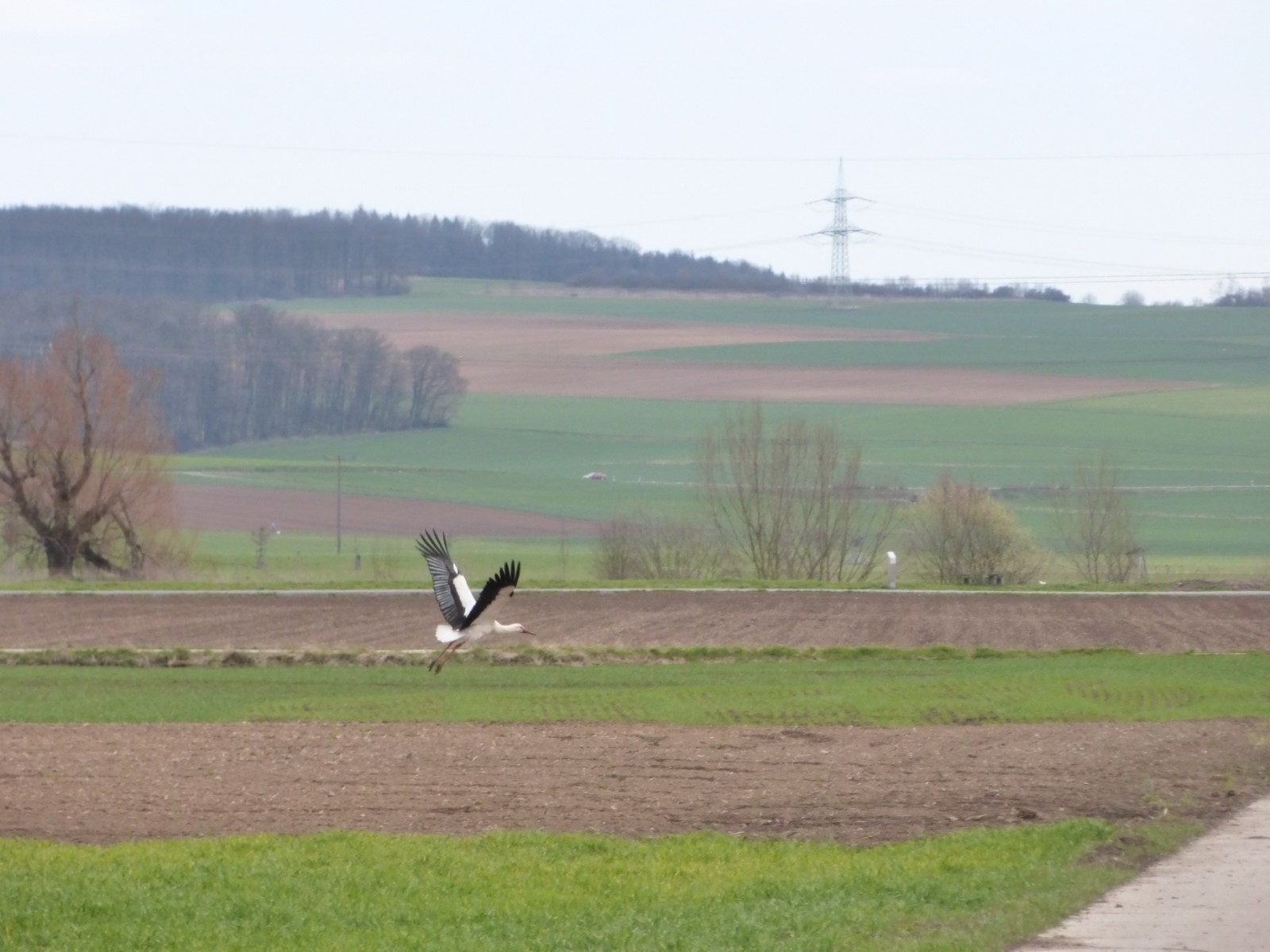 0416 Storch 2