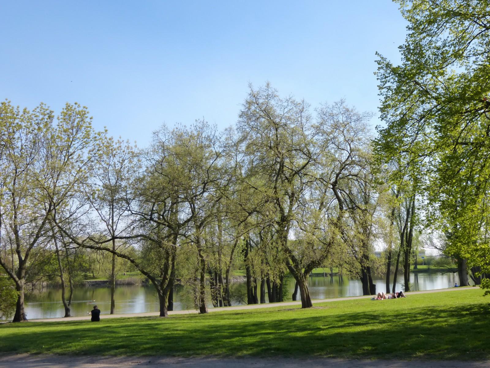 Der kleine See im Rebstockpark