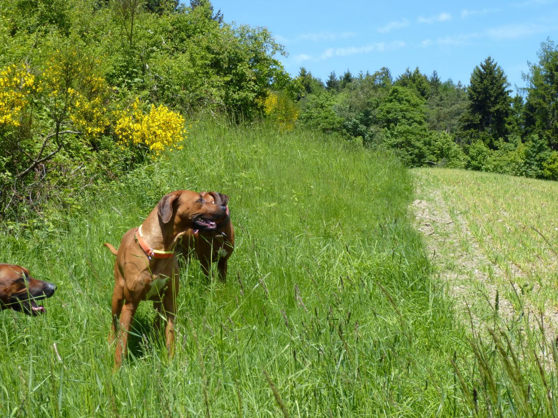 Blühende Landschaften und spielende Hunde