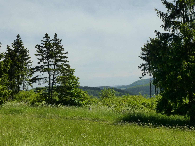 Hier stand früher ein dichter Fichtenwald