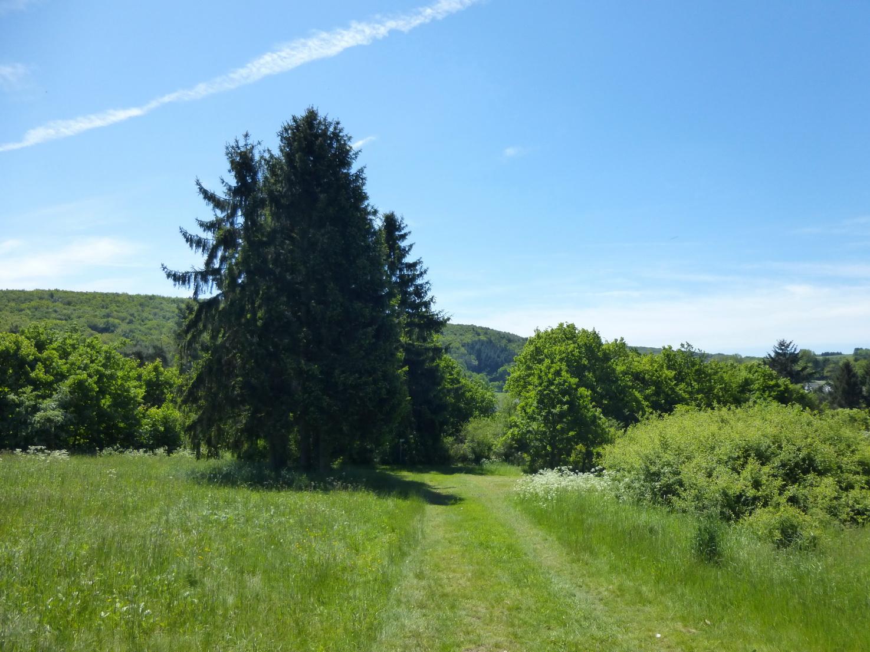 Sattgrüne Wiesen und viel Wald