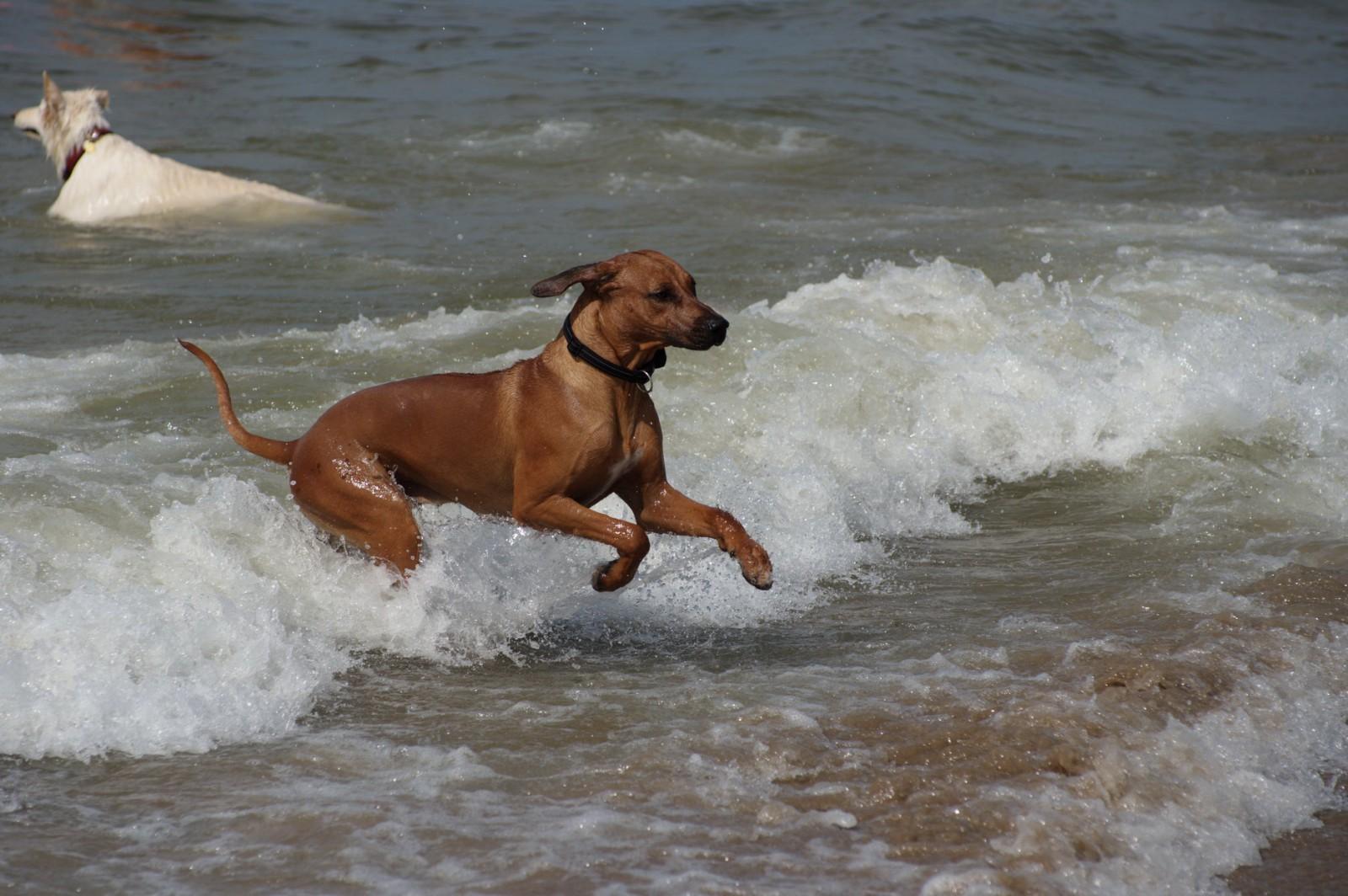Dayo hat Spaß im Wasser