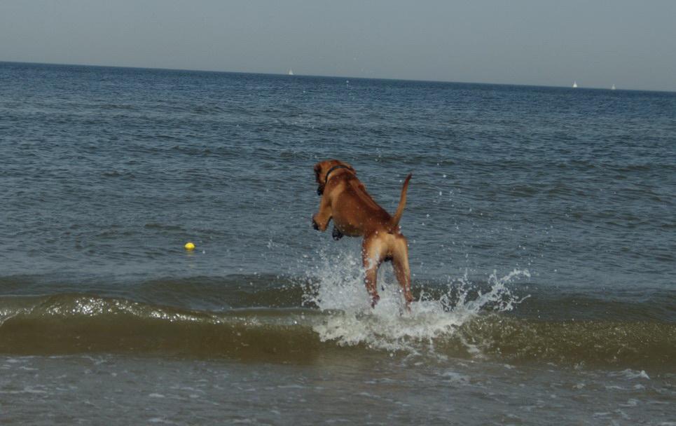 Dayo holt den Ball aus dem Wasser