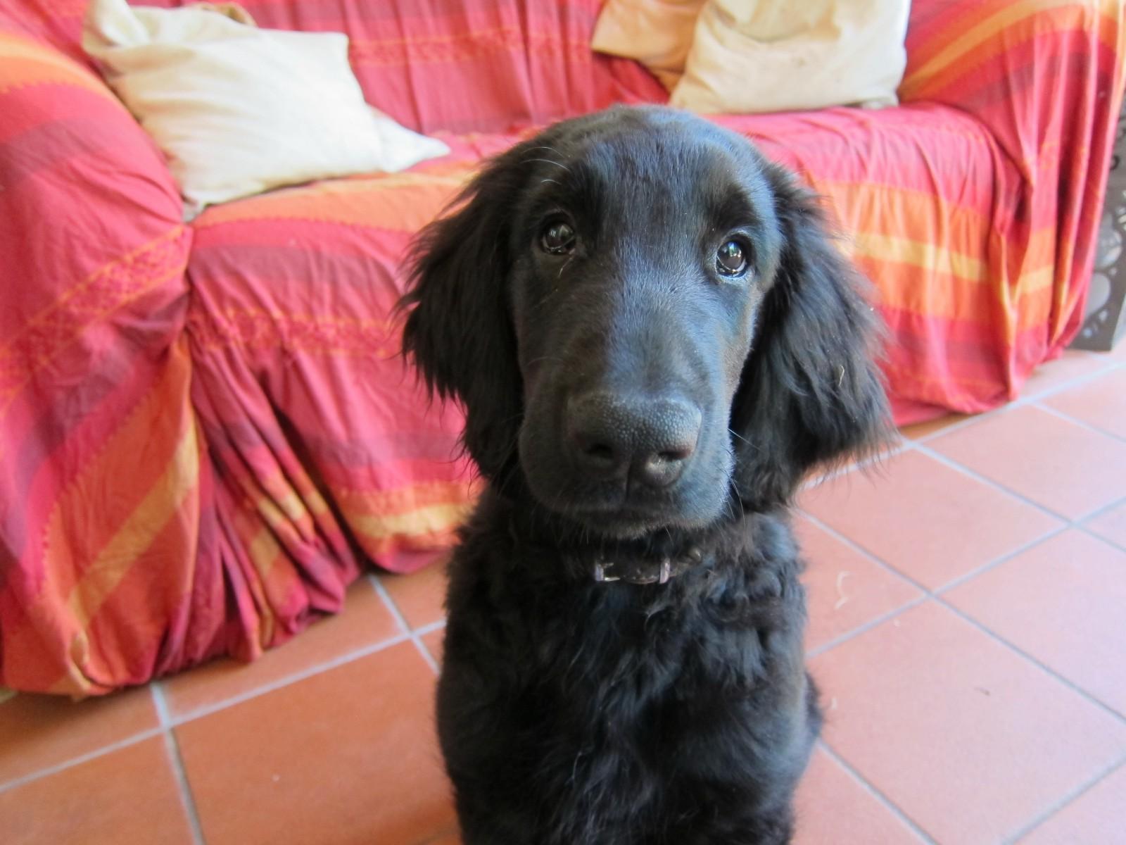 Hoover ist 13 Wochen alt und freut sich schon auf den Sommerurlaub Foto: Helge Sobik