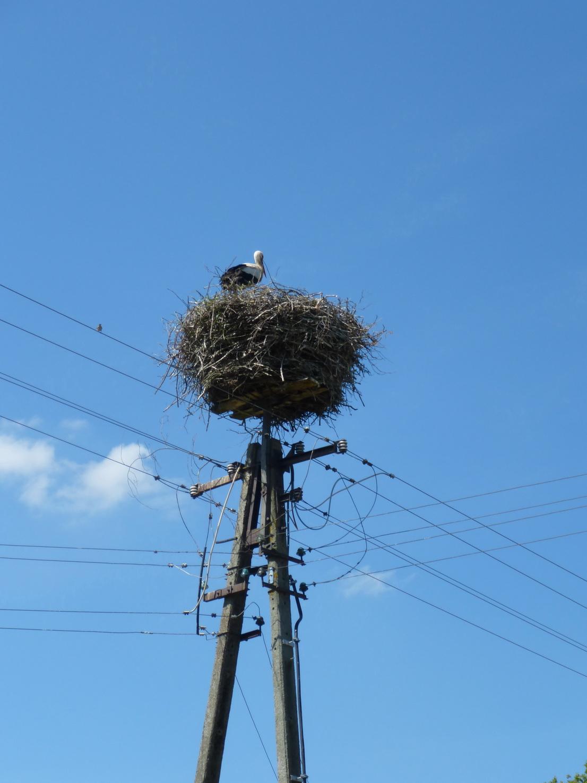 Storchennester gibt es in ganz Pommern in rauen Mengen
