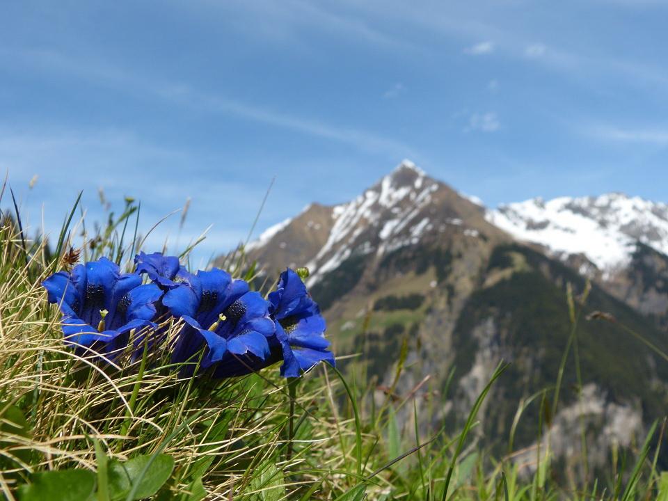 Urlaub mit Hund in Südtirol
