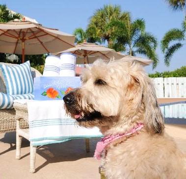 Hundefreundliche Hotels - auch in den USA nicht einfach!