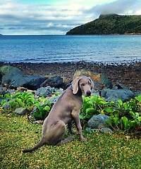 """Jester, the Instagramming Puppy"" Foto: Brisbane Times/Tourism & Events Queensland"