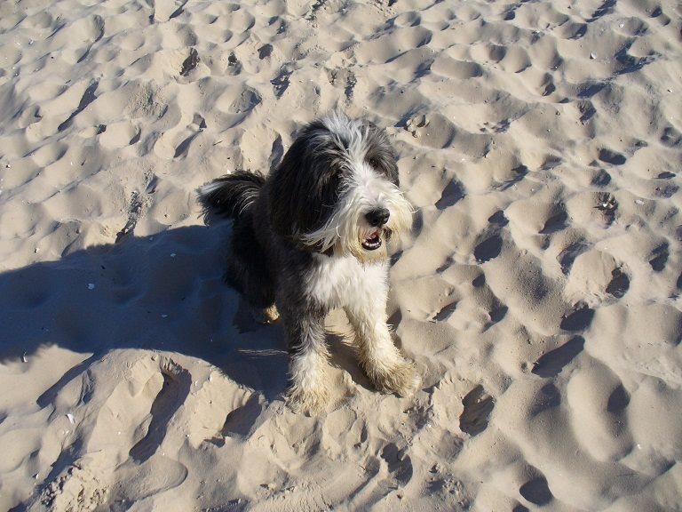 Cody am Strand