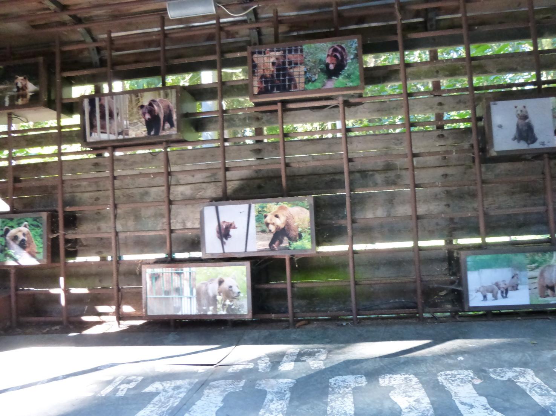 Am Zirkuswagen werden die Bären vorgestellt