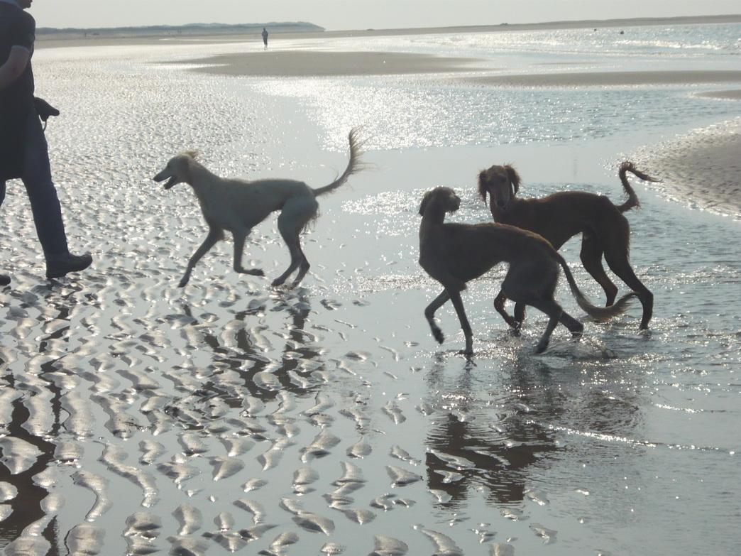 Strandlauf in Holland Foto: Stephanie Reuter
