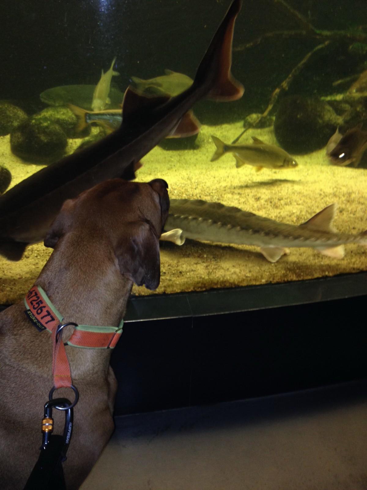 Suri und die Fische