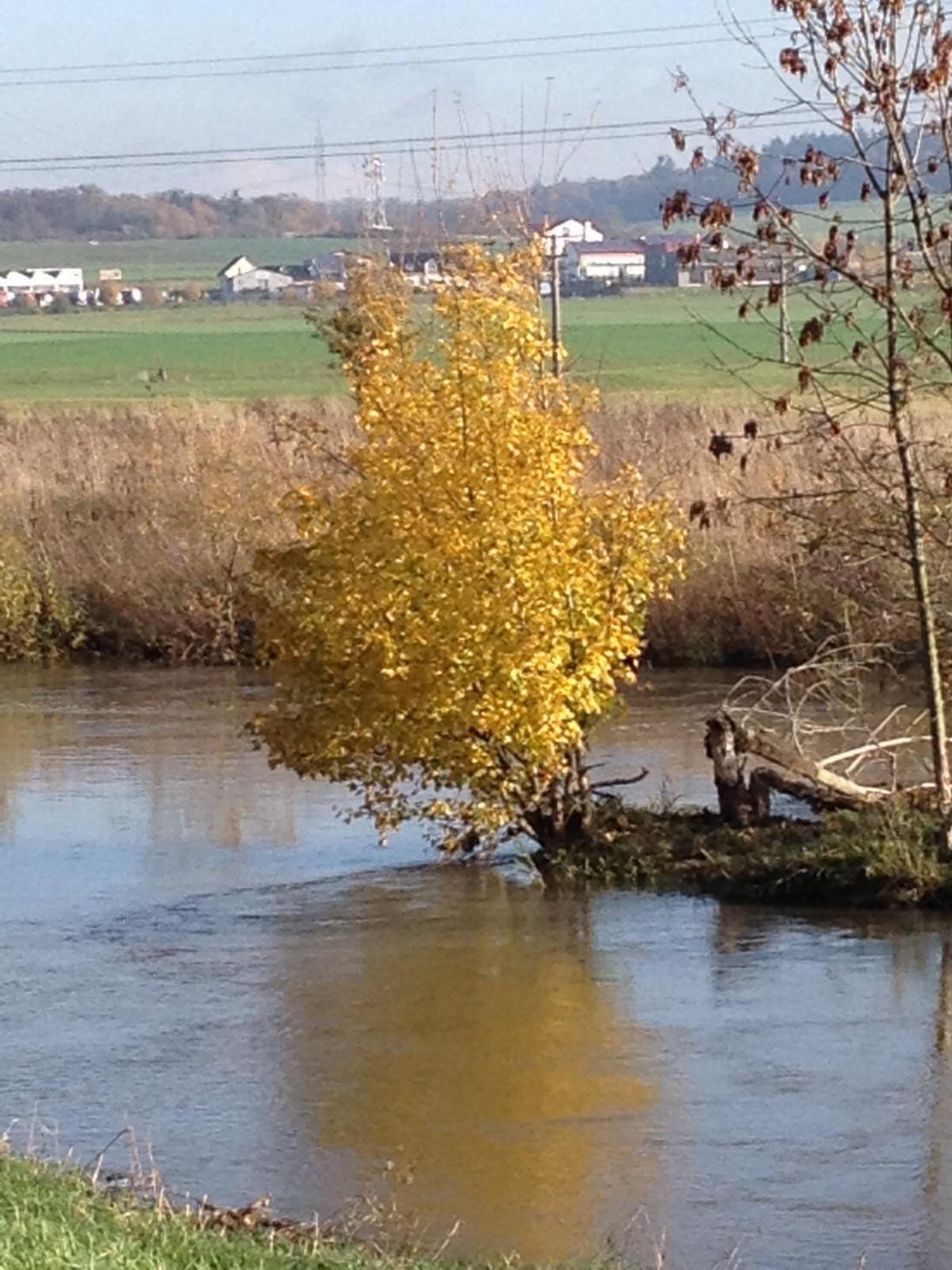Herbstfarben im Hochwasser