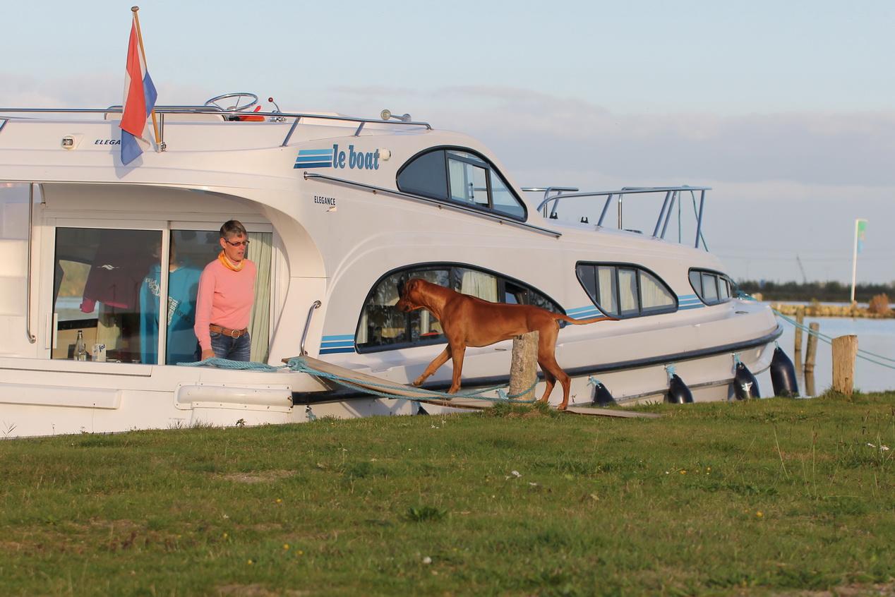 Auf einem Hausboot kann es mit zwei Hunden schon mal eng werden Foto: Claudia Pfeiffer