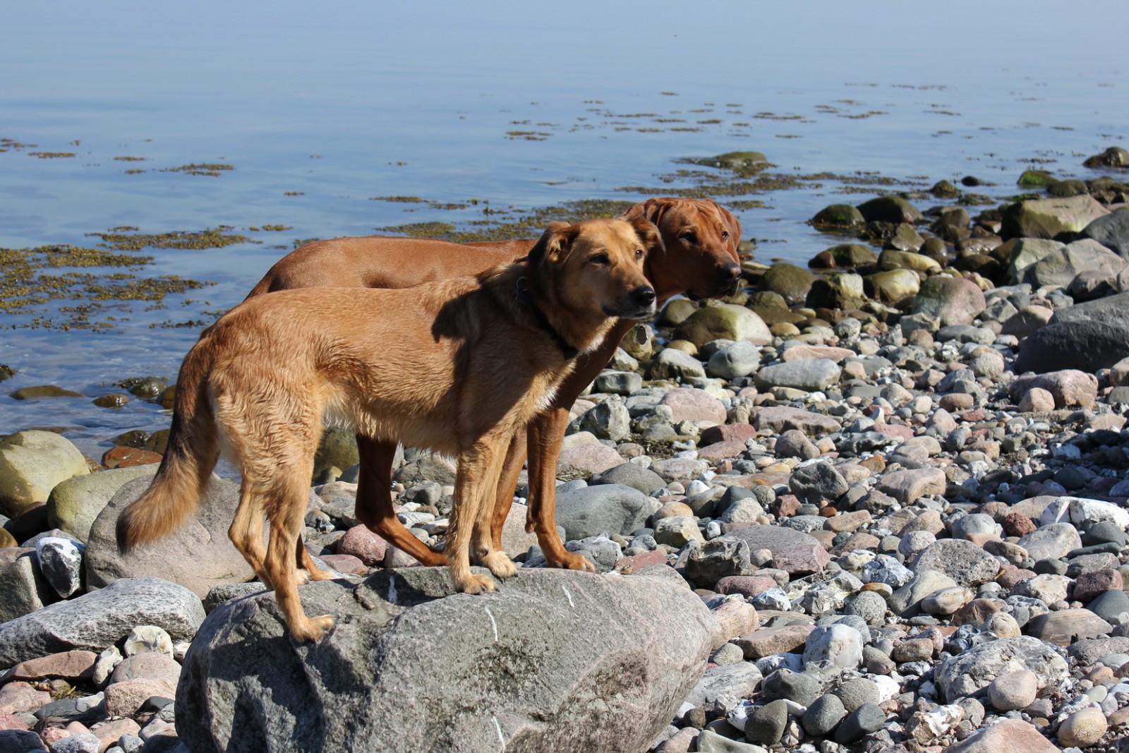 Strandtour für Vierbeiner Foto: Claudia Pfeiffer