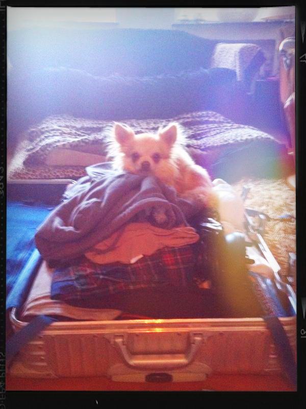 Fabian und die Weltherrschaft eines Chihuahua