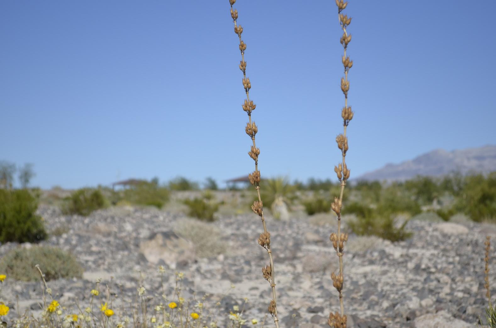 Weite Wüste ... Foto: Katja Williams
