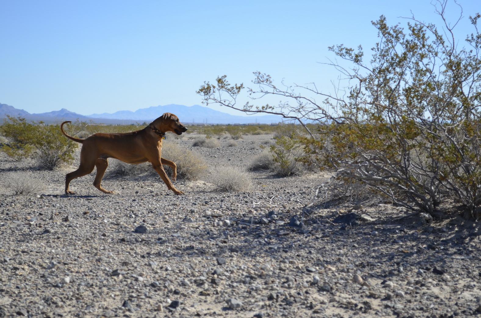... endlich Wüste ... Foto: Katja Williams