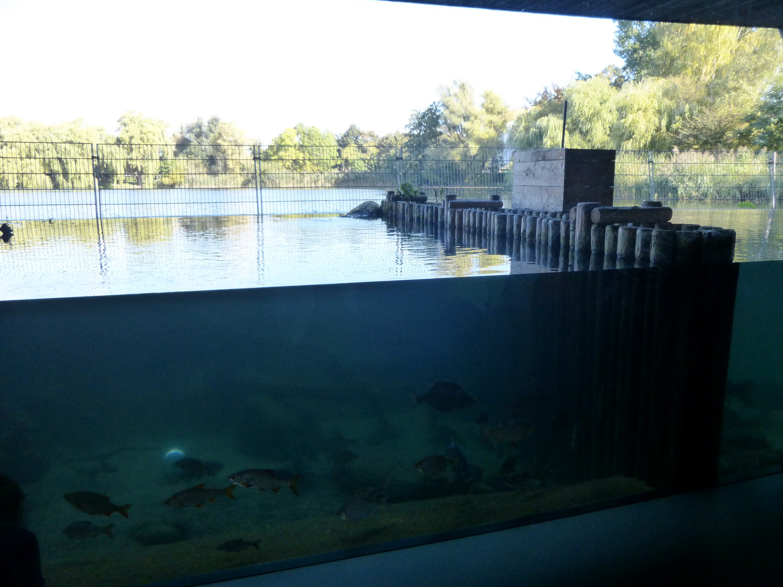 ... von der Aquarienlandschaft in das Haus der 1000 Seen ...