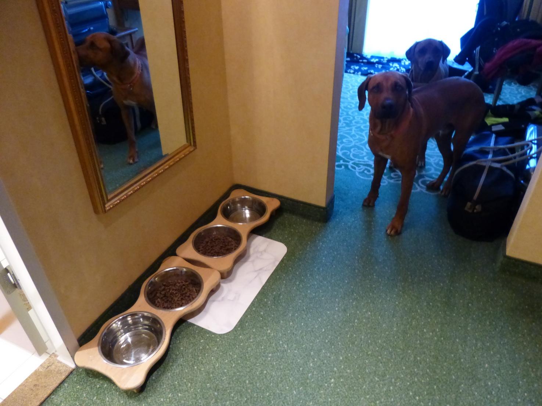 Zwei Hundefressplätze sind vorbereitet