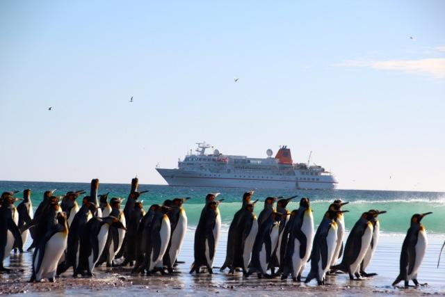 Antarktis_Volunteer_Beach_Pinguine