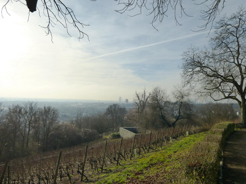 Weinanbau mitten in Frankfurt