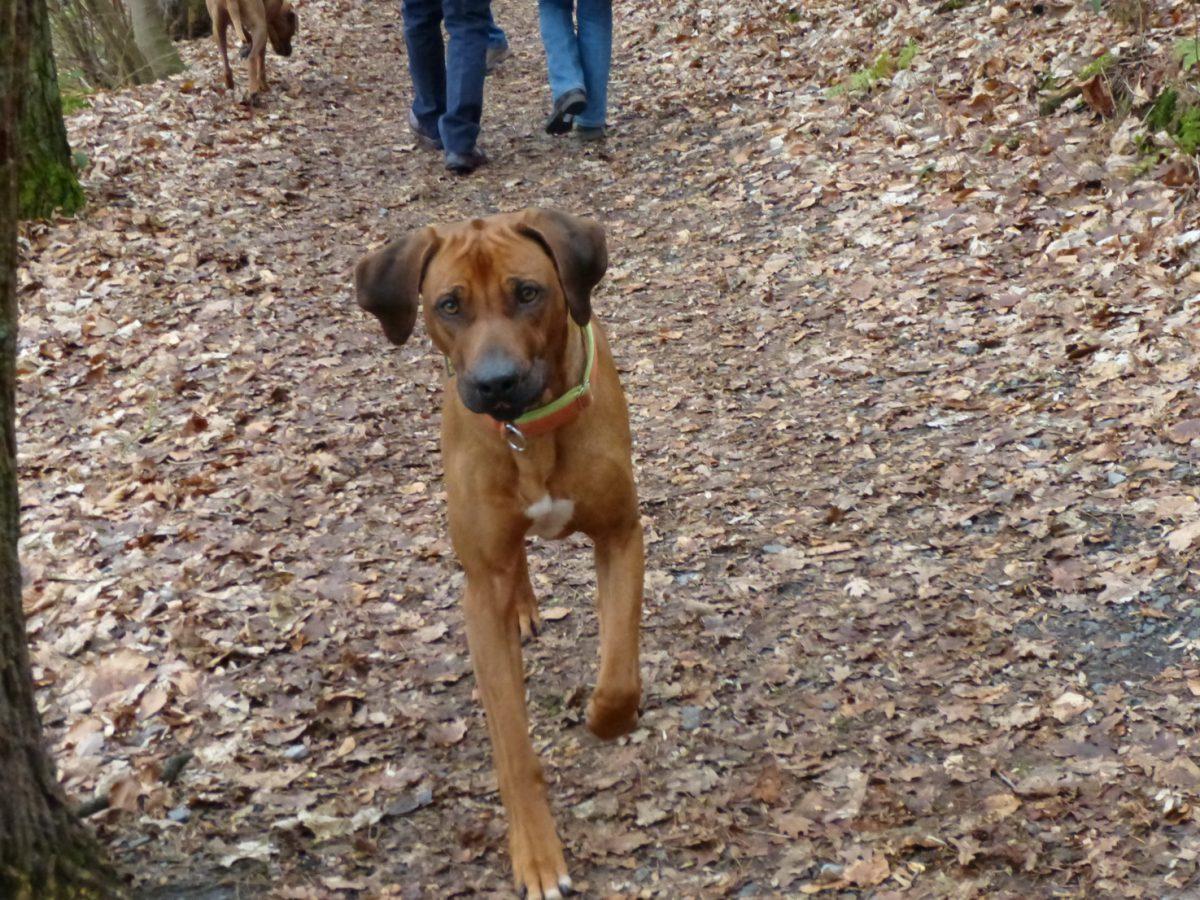 2 Hunde, 2 Burgen und 1 Odenwald
