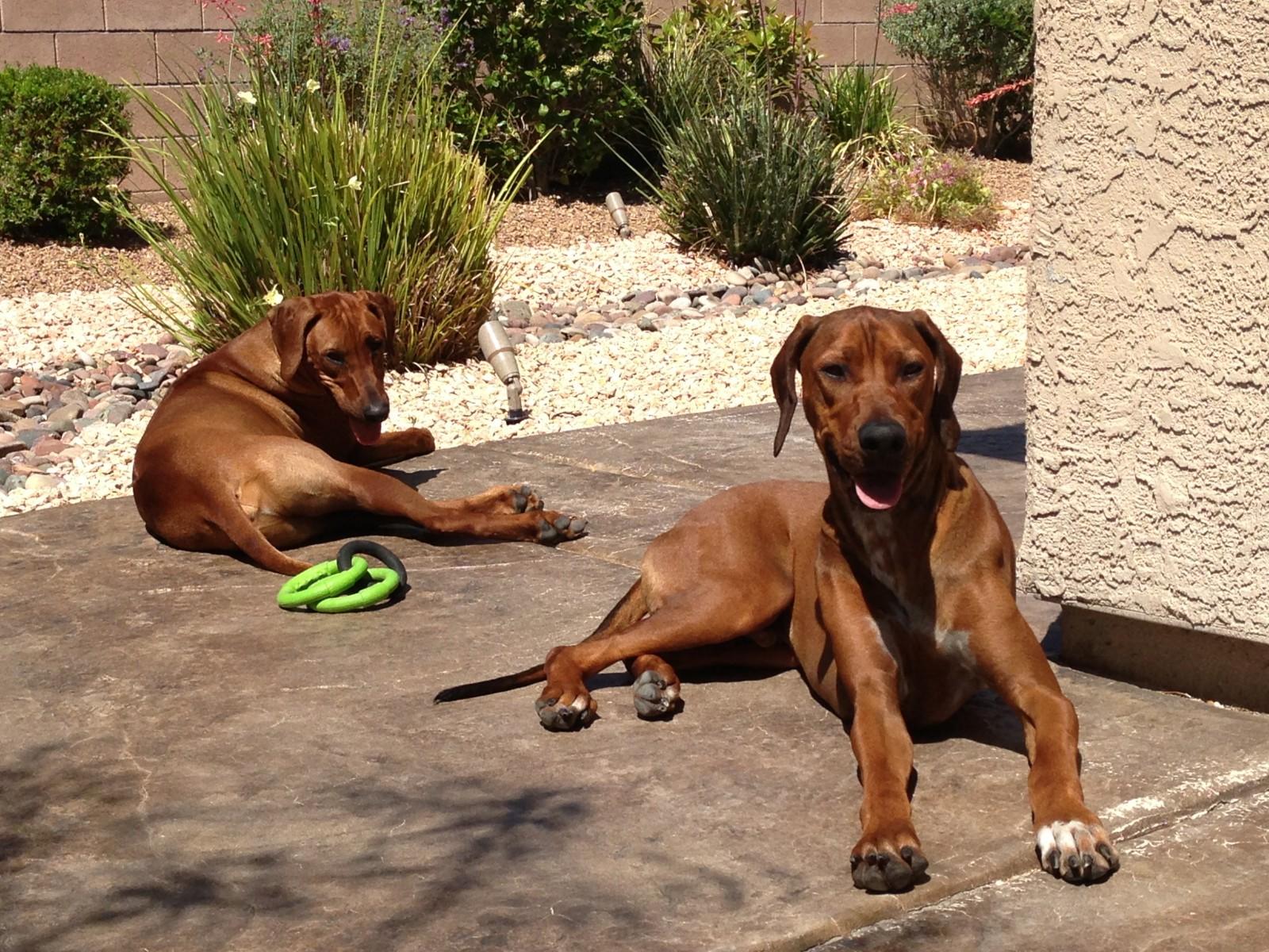 Julius (hinten) und Bruce bei uns im Garten