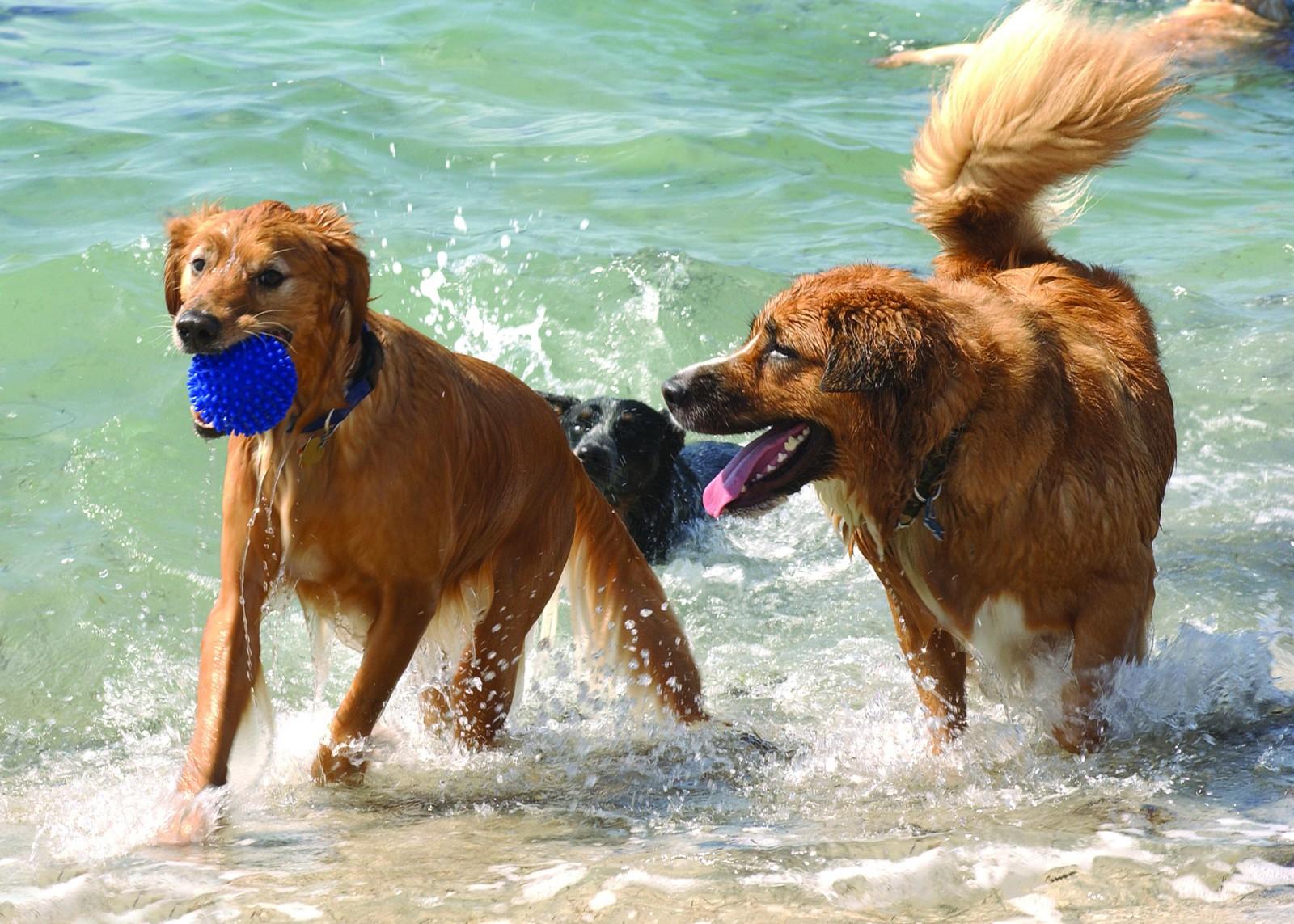 Spaß an den Hundestränden von Clearwater/St. Petersburg