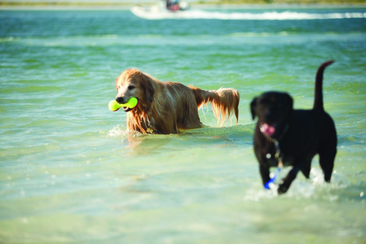 Hundeurlaub unter der Sonne Floridas