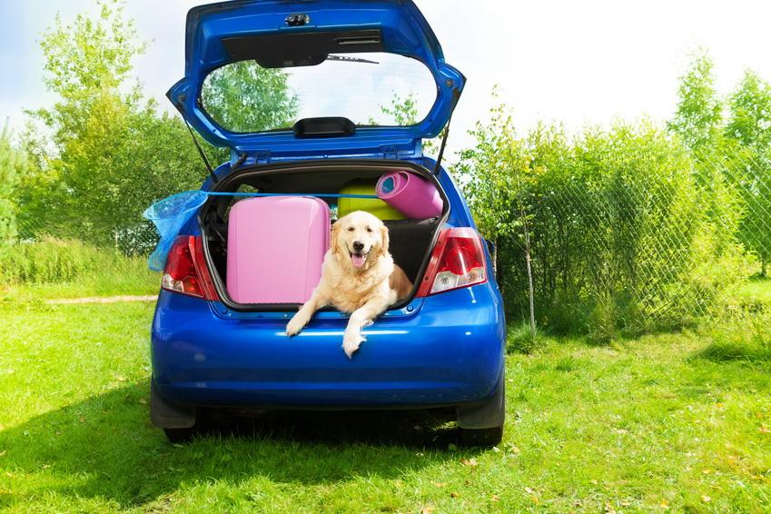 Kind, Kegel und Hund unterzubringen, bedarf einer guten Reisevorbereitung © SerrNovik - Fotolia.com