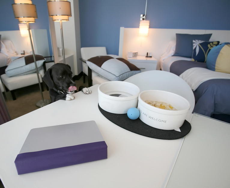 So ist es ideal: Der Hund wird im Hotelzimmer mit Futter und Spielzeug begrüßt Foto: © ilumus photography - Fotolia.com
