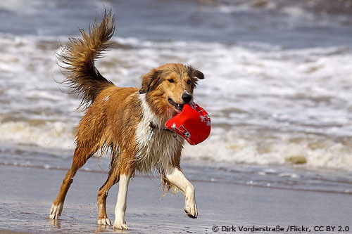 Hundespass am Strand Foto: Dirk Vorderstraße/Flickr, CC BY 2.0