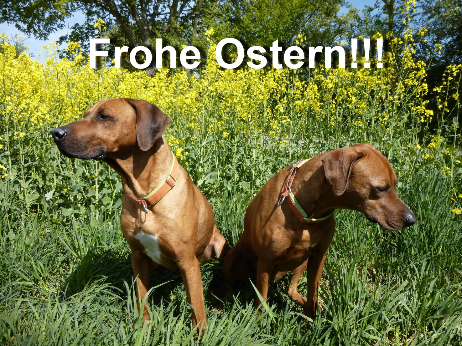 0418 Frohe Ostern