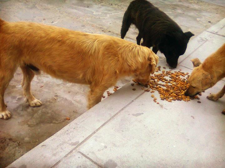 0522 Futterhunde