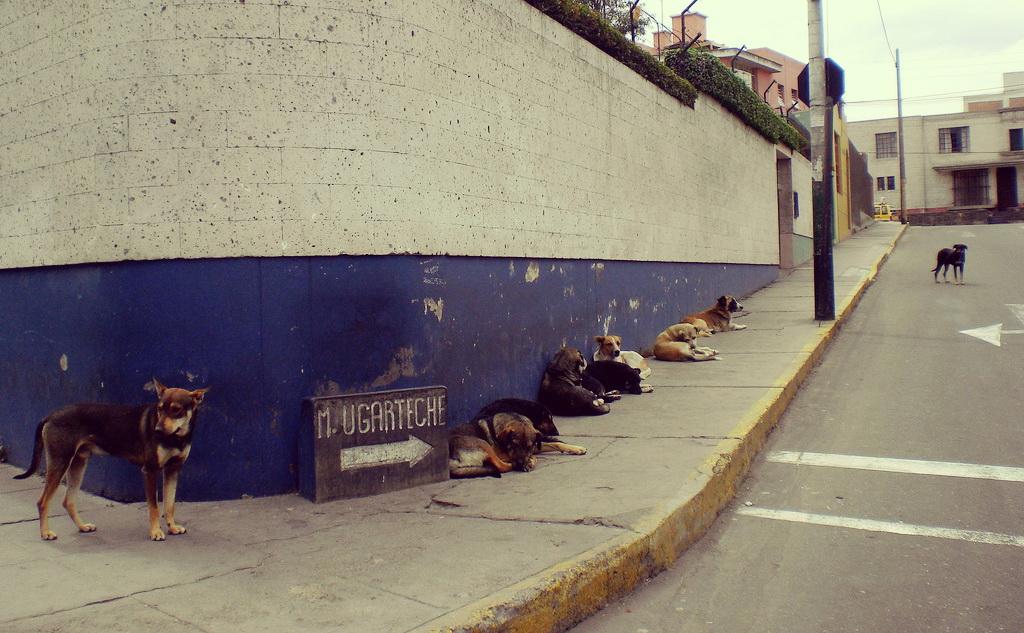 0522 perroscallejeros_flickr-mundoalreves_b